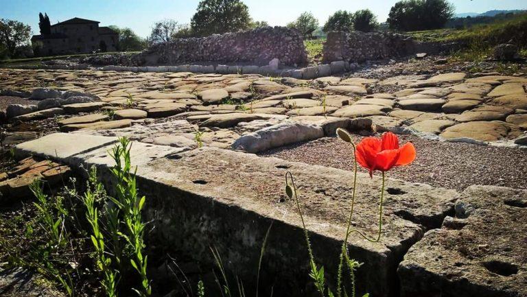parco_archeologico_suasa6