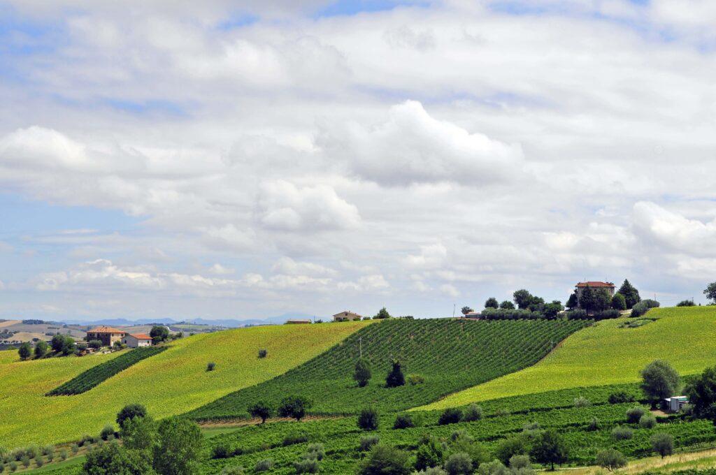 Montecarotto2